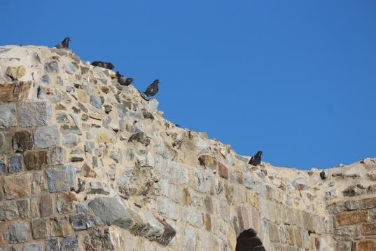 I signori del Castello di Montemassi